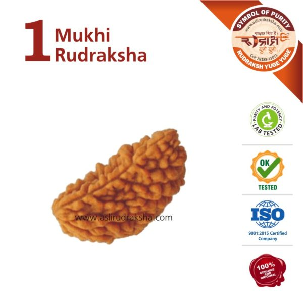 1 Mukhi Rudraksha | Lab Tested | Certified | 100% Original