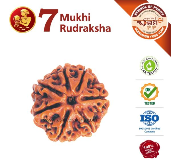 Kumbh Rashi Rudraksha