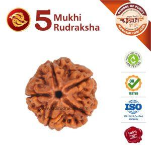 min-rashi-rudraksha