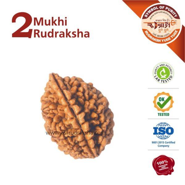 2 Mukhi Rudraksha | Lab Tested | Certified | 100% Original