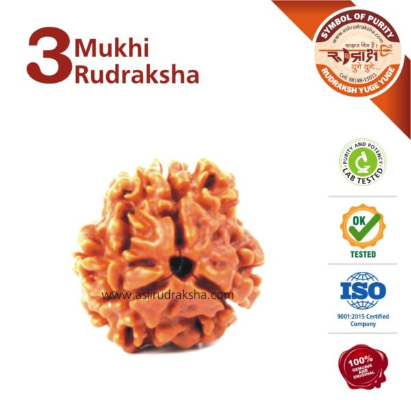3 Mukhi Rudraksha | Lab Tested | Certified | 100% Original | Nepal Bead