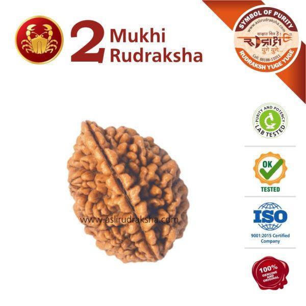 Kark Rashi Rudraksha 2 Face