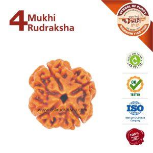 4 Mukhi Rudraksha | Lab Tested | Certified | 100% Original | Nepal Bead