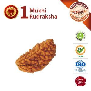Singh Rashi Rudraksha 1 Face