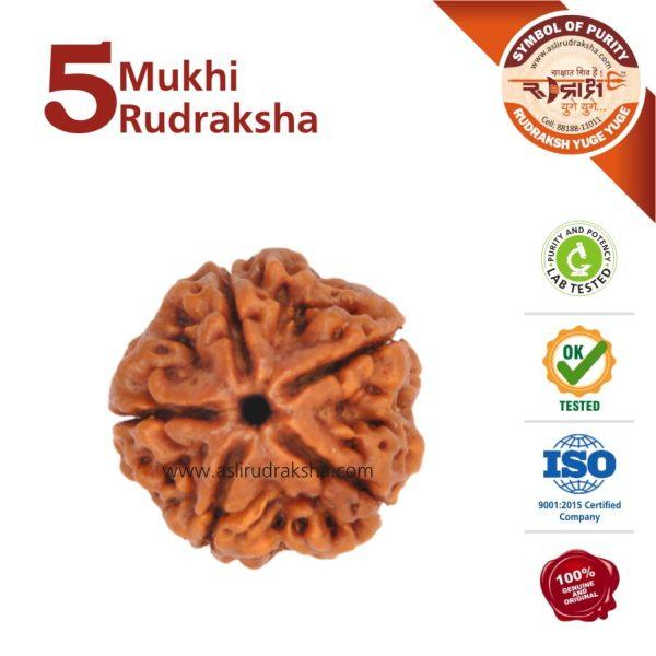 5 Mukhi Rudraksha | Lab Tested | Certified | 100% Original | Nepal Bead