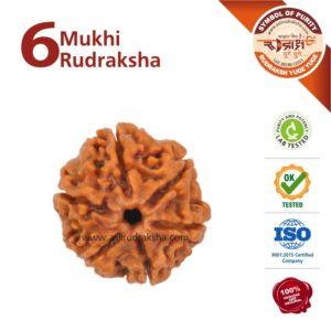 6 Mukhi Rudraksha | Lab Tested | Certified | 100% Original | Nepal Bead