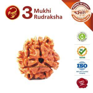 Vrshchik Rashi Rudraksha 3 Face