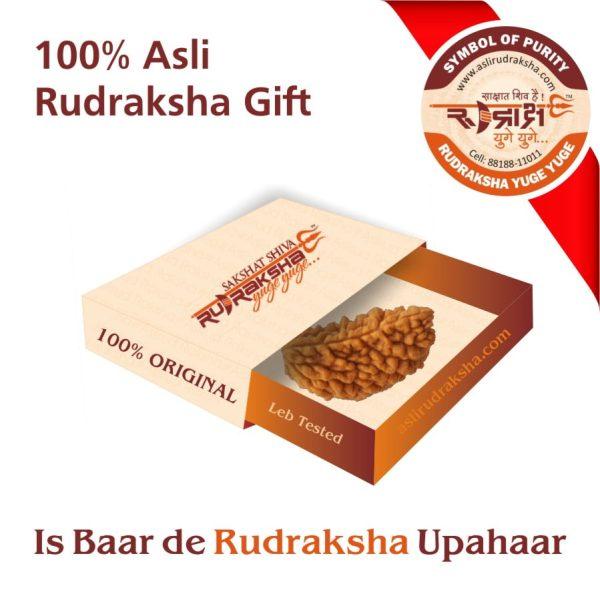 1 Mukhi Rudraksha